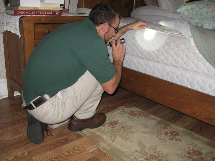 how to inspect for bed bugs