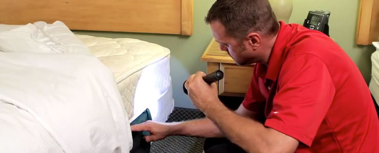kill bed bugs without pesticides