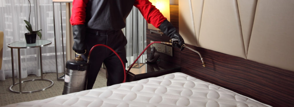 how to get rid of bed bugs with pest control