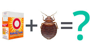 how to kill bed bugs using baking soda