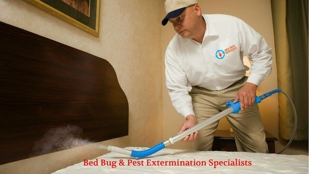 professional or specialist killing bed bugs