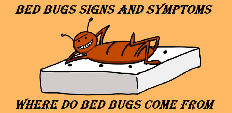 Bed bugs signs and symptoms and where do bed bugs come from