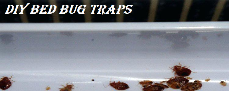 How to catch bed bugs with homemade traps