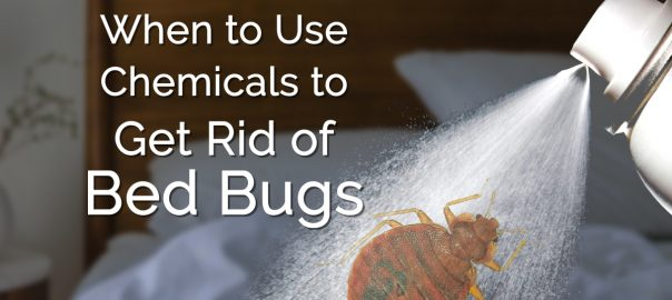 chemicals which are used in killing bed bugs and their eggs