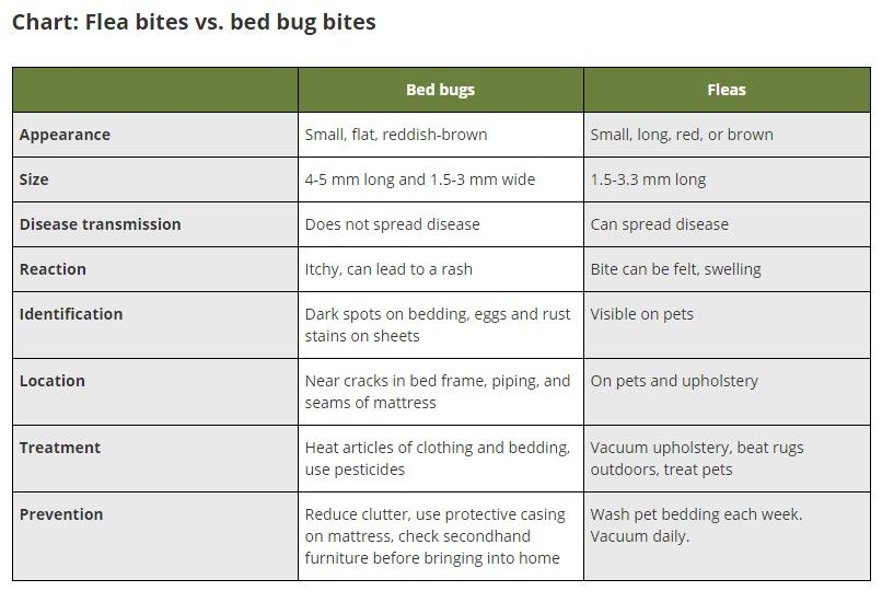 chart for identifying the difference between flea bites and bed bug bites