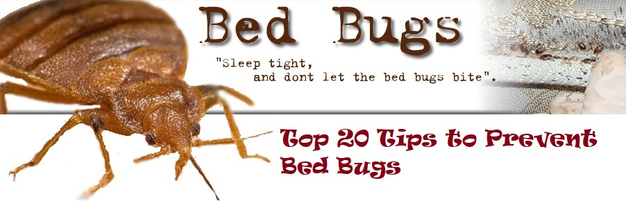 tips to prevent bed bugs from entering our house