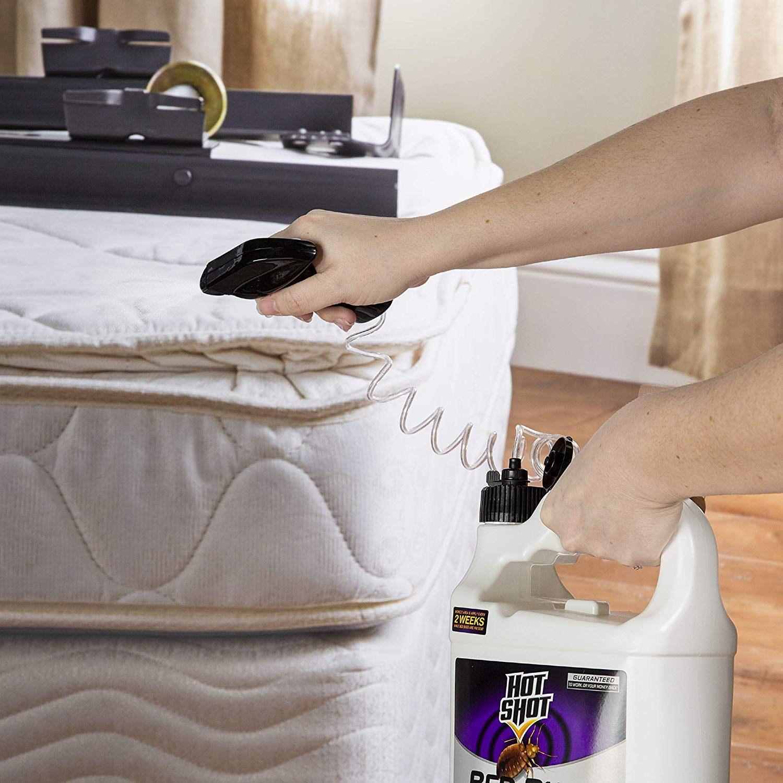 does hot shot bed bug spray kill lice